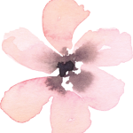 cropped-blush-flower-021.png
